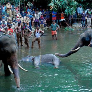 elephant-died-pineapple-crackers-Kerala-2020